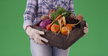Closeup of farm woman carrying crate of vegetables on green screen
