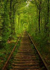 Fototapeta Natural tunnel formed by trees in Ukraine, Klevan  called as tunnel of love