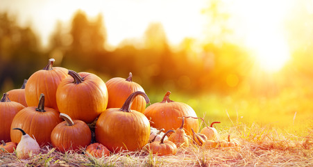 Poster de jardin Automne Thanksgiving - Ripe Pumpkins In Field At Sunset