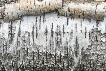 rough texture birch bark, roll white tree bark, abstract background