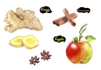 Ginger apple cinnamon watercolor hand drawn illustration