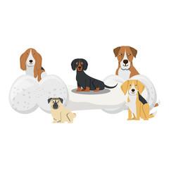 cute dogs design