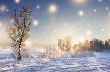 Christmas background. Winter nature landscape on sunny morning with magic glowing snowflakes. Shine of lights on Xmas. Sunbeams in beautiful winter scene. Scenery winter. Hoarfrost on tree at sunrise.