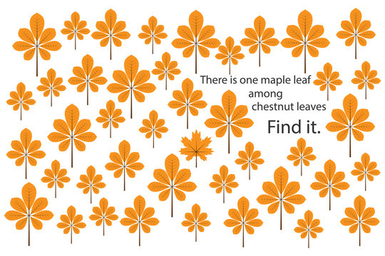 Find maple leaf among chestnut leaves, fun education puzzle game with for children, preschool worksheet activity for kids, task for the development of logical thinking and mind, vector illustration