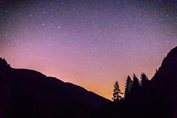 Sterne und schwarze Baum-Silhouetten, Nachtaufnahme