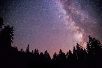 Milchstraße und schwarze Baum-Silhouetten, Nachtaufnahme