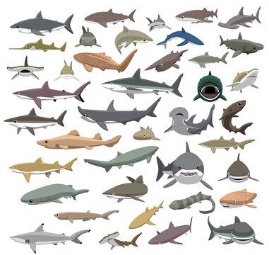 Many Sharks Species of the World Cute Cartoon Vector