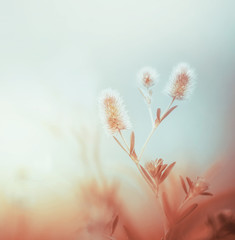 Wild plants at morning foggy sky. Outdoor nature background. Pastel color. Dawning light
