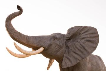 Elefante con trompa levantada