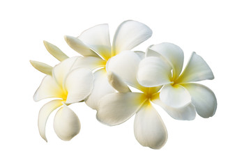 Zelfklevend Fotobehang Frangipani White plumeria flower isolated on white background with clipping path