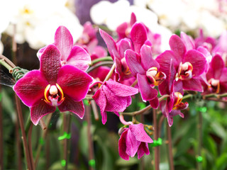 orchid flower in the garden