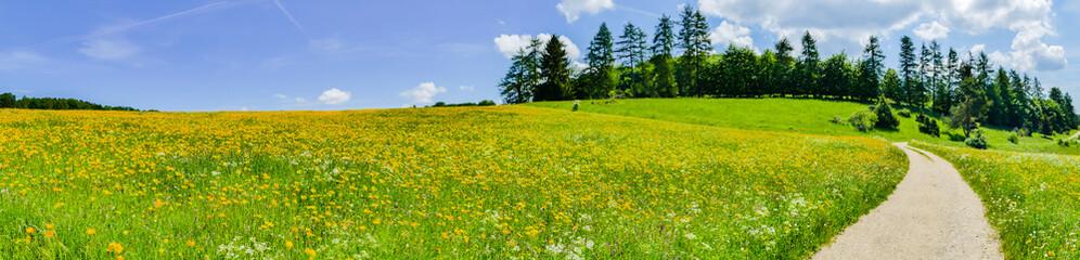 Feldweg durch Sommerlandschaft