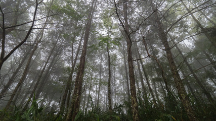 fog and tree in forest