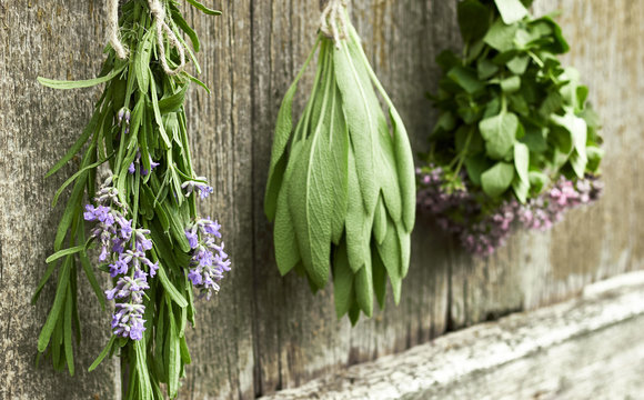 Fresh herbs: lavender, sage and thyme hanging to get dried over old shabby rustic wooden background, diagonal composition, copy space