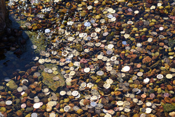 Coins thrown into the water of a fountain for good luck