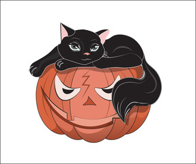 black cat on orange pumpkin