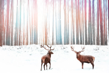Noble red deer against a winter fantasy colorful forest. Winter Christmas image.
