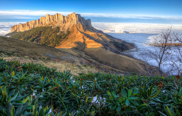 Beautiful scenic autumn landscape of majestic Bolshoy Tkhach rocky mountain peak under blue sky at sunset above white shroud of low scattered clouds with rhododendron bush. West Caucasus, Russia