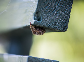 Hairy spider lurking under a park bench