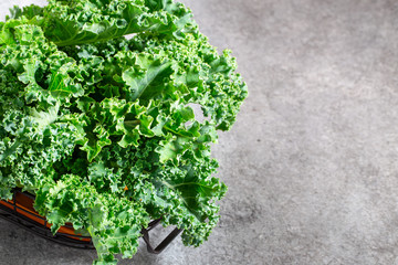 Fresh curly green Kale on grey background with copy space