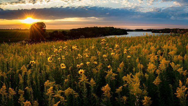 sunset over a field of wildflowers