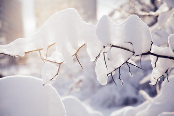 Tree branches covered with snow on sunny day. Wall mural