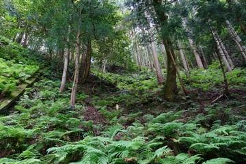 izumo forest