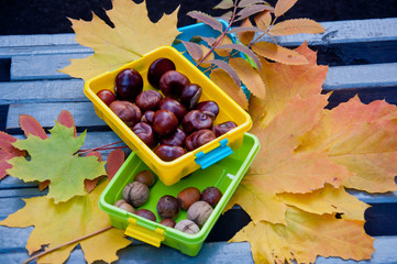 Autumn composition. Brown chestnuts and acorns in colored plastic boxes staying on grey bench near fallen leaves