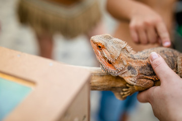 Big orange exotic lizard in the hands on woman and her child