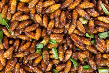 chrysalis silkworm ,silk worm cocoon.