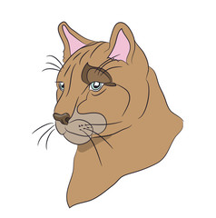 portrait of a cougar, vector