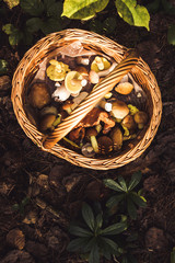 mushroom foraging wicker basket