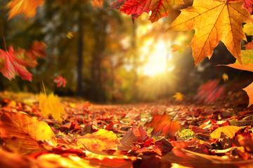 Stimmungsvolle Szene im Herbst mit fallenden Blättern und untergehender Sonne