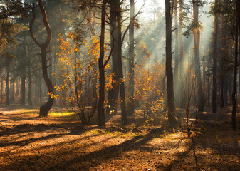walk in the autumn forest. autumn colors. sunlight.