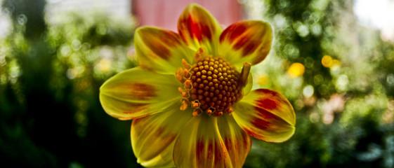 unusual photos of flowers