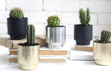 house cactus plants in beautiful metal pots. an idea for decorating a room