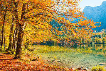 Autumn trees with red-yellow leaves on the shore of lake in Austrian Alps.