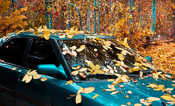 Abstract image with car in the autumn leaf on the windshield