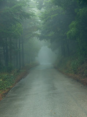 Recess Fitting Khaki Forest road in a green foggy forest