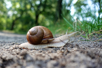 The snail in the sink crawls on the ground.