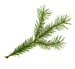 Evergreen twig of Christmas tree