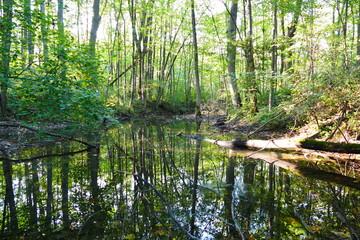 Waldszene mit Sumpf