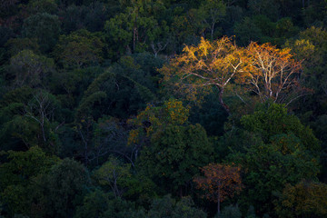 autumn tree in the forest with first light in Tak province, Thailand