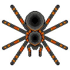 Pixel art tarantula spider detailed isolated vector