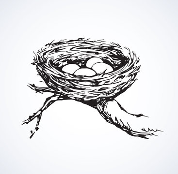 Nest. Vector drawing