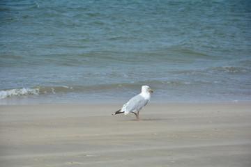 Möwe steht am Sandstrand mit Meer im Hintergrund