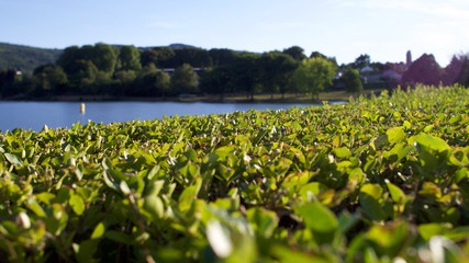 View over a box hedge to the lake (shallow depth of field)
