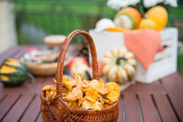 Foto op Aluminium Picknick A basket with autumn chanterelles -mchanterelles in september on the table with different decorations