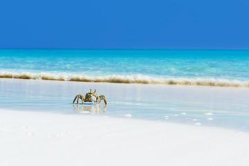 Ghost crab on white sandy beach