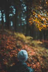 Herbstblätter in der Pfütze Regenzeit im Herbstwald spazieren